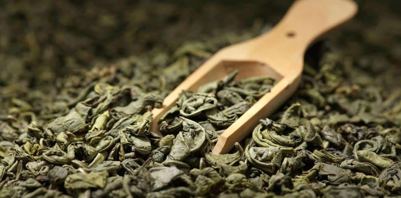 Extrait de thé vert : bruleur de graisse naturel