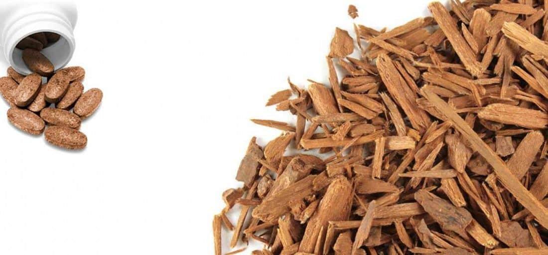 Yohimbine : bruleur de graisse naturel puissant