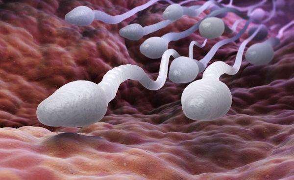 Comment avoir du sperme blanc ?